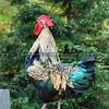 arroyo_grande-chicken_0177