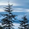trees-8742