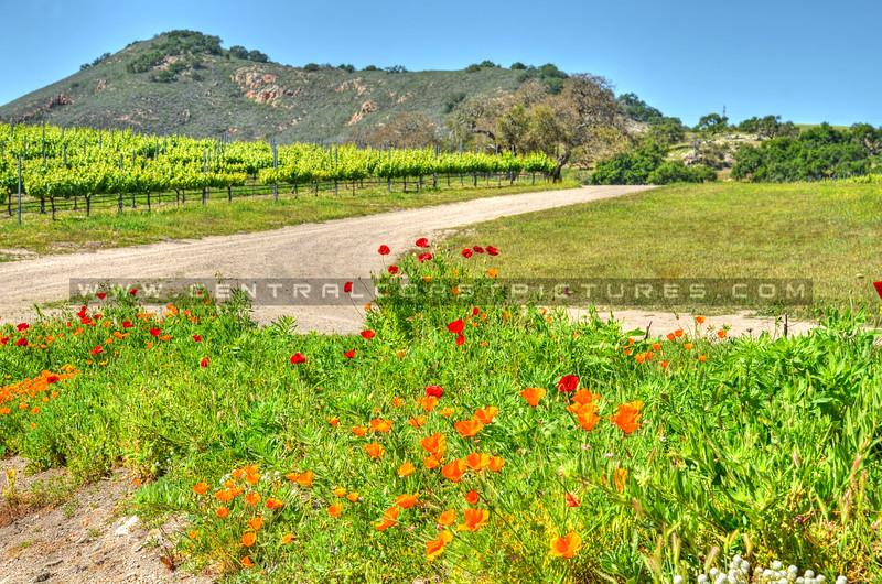 letitia winery_6693