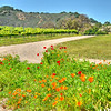 letitia winery_6693