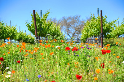wildflowers-winery_6725