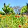 wildflowers-winery_6725