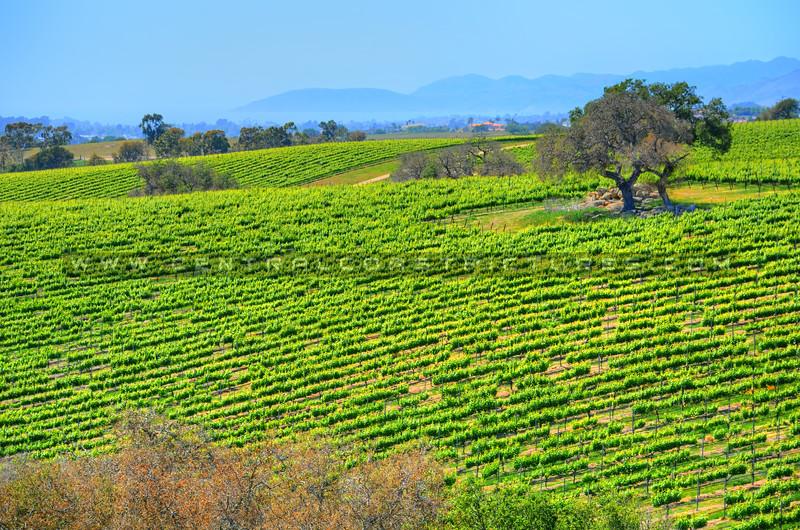 winery_6713