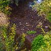 arroyo grande creek-1991