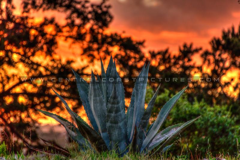 home sunset arroyo grande 3533-