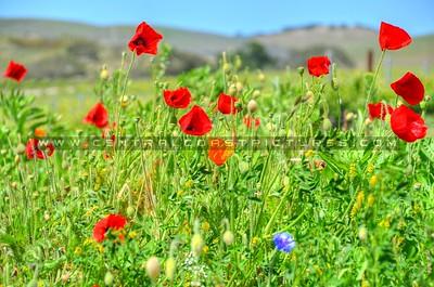 wildflowers_6665