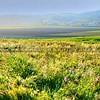 flower-field_4341