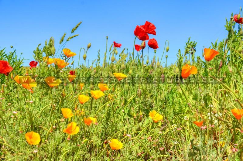 wildflowers_6680