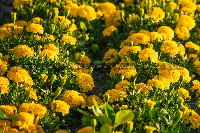flower field 2876-2876