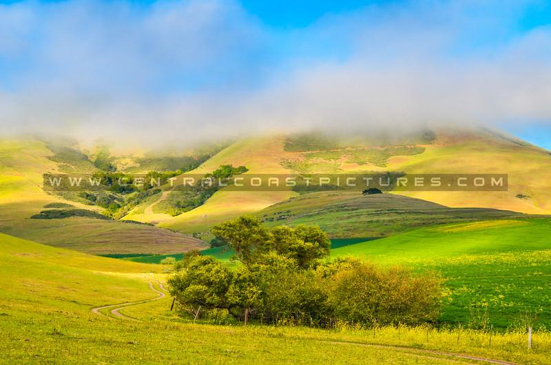 8-24x36-EXAM-ROOM-hills road-5808