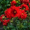 flower field 2881-