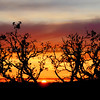 arroyo-grande-sunset_4884