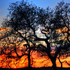 arroyo-grande-sunset_4882