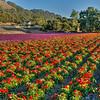 flower field 2858-