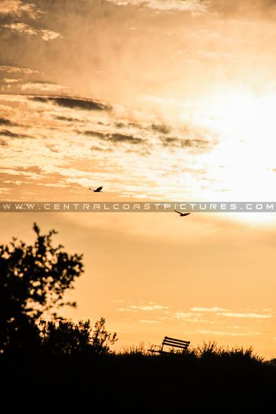 home bench birds-8643