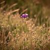 home flower 8686-8686