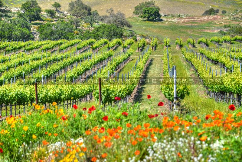 letitia winery arroyo grande_6671