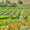 letitia winery arroyo grande_6671