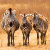050800 Africa