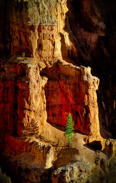 Hoodoo and Tree, Bryce Canyon, Utah