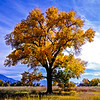 Fall Colors in Bishop, California