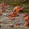 The Hippo Pool, Grumeti River, Tanzania