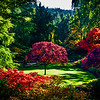 A Tree in the Sunken Garden, Butchart Gardens