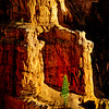 Hoodoo and Tree, Bryce Canyon