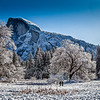 Half Dome in Winter fromYosemite Meadow