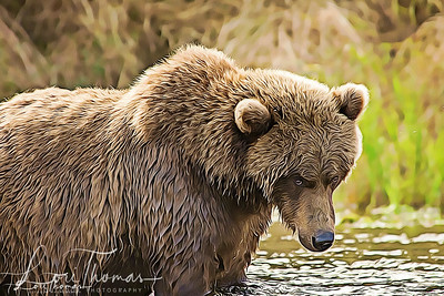 Brown Bear Look