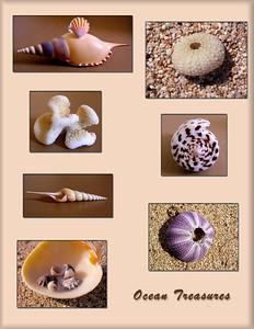 Sea Treasures  shells, sea urchin, coral, sand