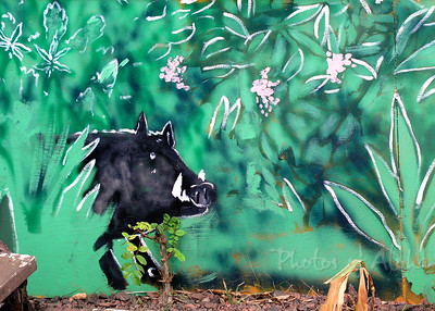 OMG - a Boar - Planet Surf art detail  DrewToonz painted the entire building in wonderful murals.  Photographed in 2003. The surf shop moved into Hale'iwa Town, the building has been repainted grey and is empty as of late 2008.  Corner of Pupukea and Kamehameha Hwy, across from Foodland, and Shark's Cove  North Shore of O'ahu Andrew Miller, artist