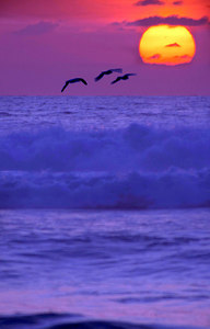 Iwa @Sunset, Kauai