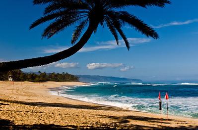 Landmark palm tree, Sunset Beach