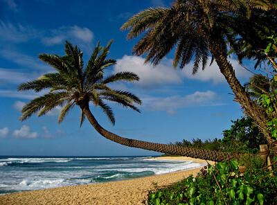 landmark leaning palm tree