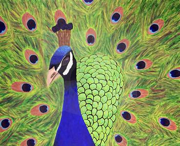 Madi Dyer (11), Peacock, Acryiclic on Canvas
