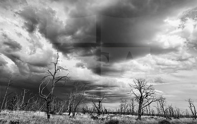 Garrett Goolsby (10), Trees, Digital Photography (TAPPS - 3rd in Black and White Photography)