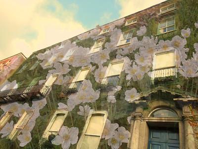 Lauren Pettijohn (11), Irish Flowers, Digital Collage (Collin County Art Show - 2nd Place in Photography)