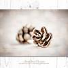 Pinecones #2 - Dreamy Gold