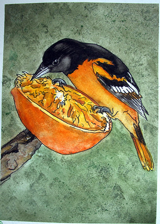 Orioles and Oranges