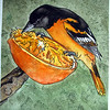Orioles and Oranges