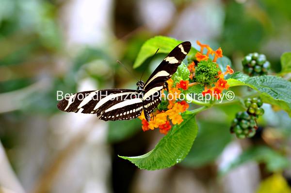 Mid Day Nectar