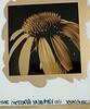 Katherine Robertson PHotographygold leaf fine art prints_17