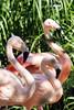 The Three Flamingos.