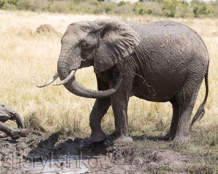 4_elephant_9843