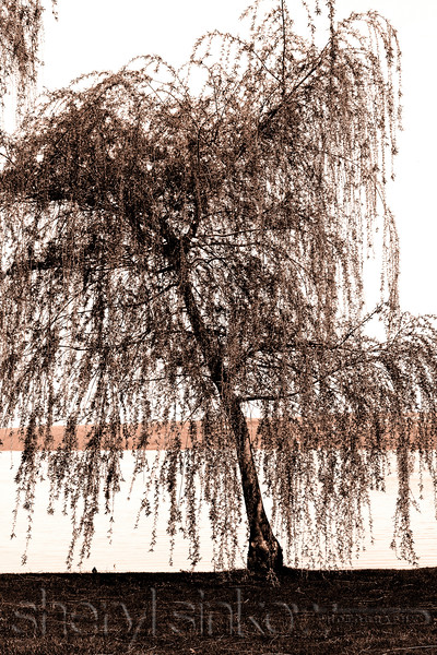 Bend Like the Willow