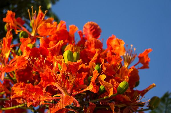 OrangeBurst_00543