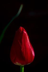 Peter's Flower