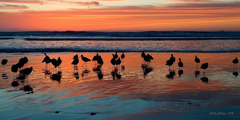 fowl sunset
