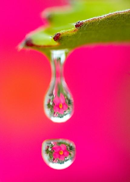 Pink drops